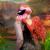 Illustration du profil de zoenalia